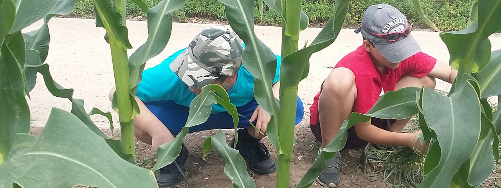 Φωτογραφία από παιδιά που εξερευνούν τα φυτά στο Πάρκο Σταύρος Νιάρχος