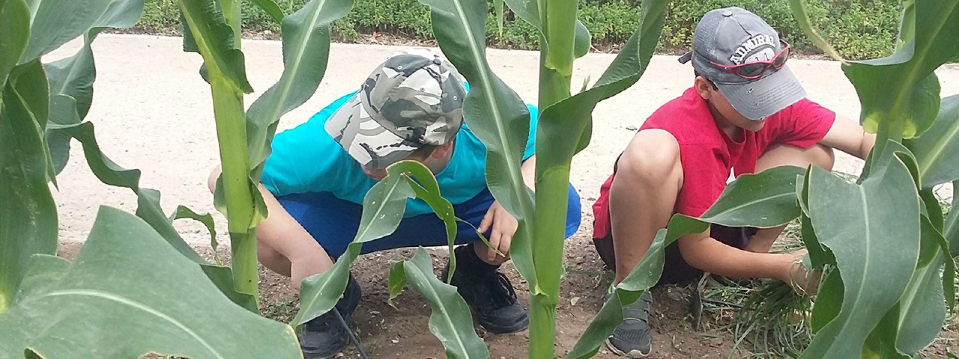 Φωτογραφία από παιδιά που εξερευνούν τα φυτά του Πάρκου Σταύρος Νιάρχος