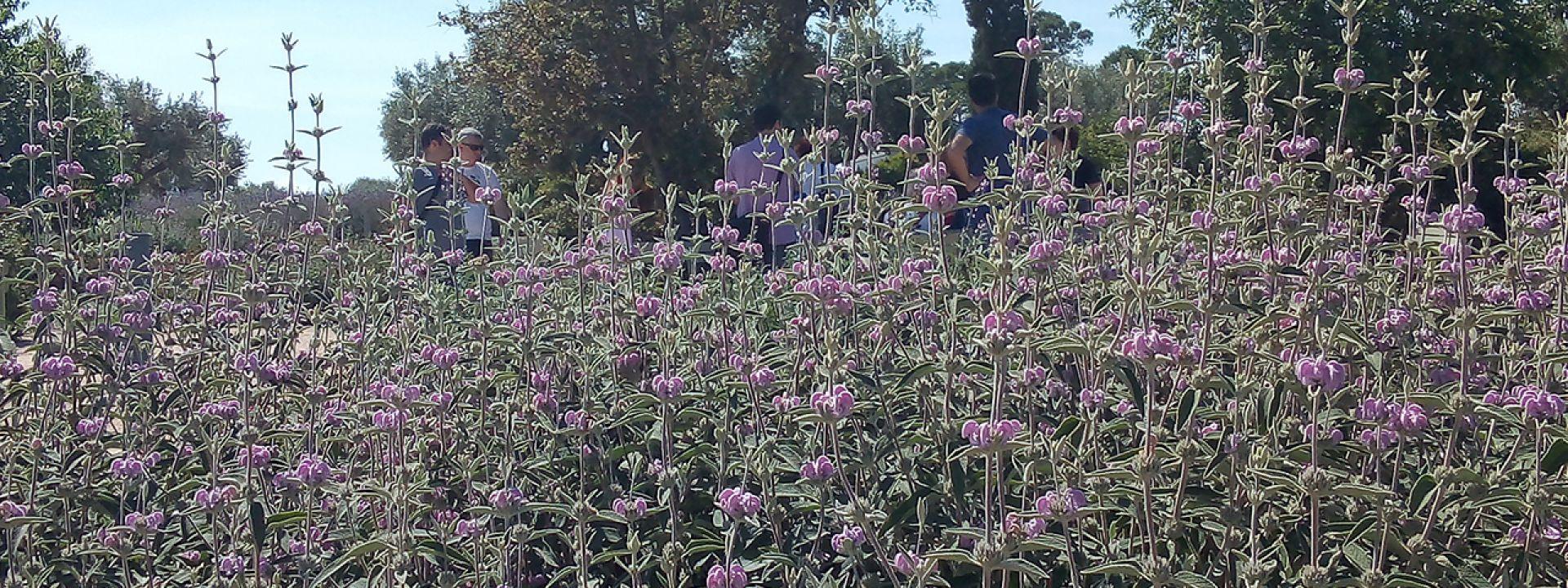 Φωτογραφία από φυτά και λουλούδια του Πάρκου Σταύρος Νιάρχος