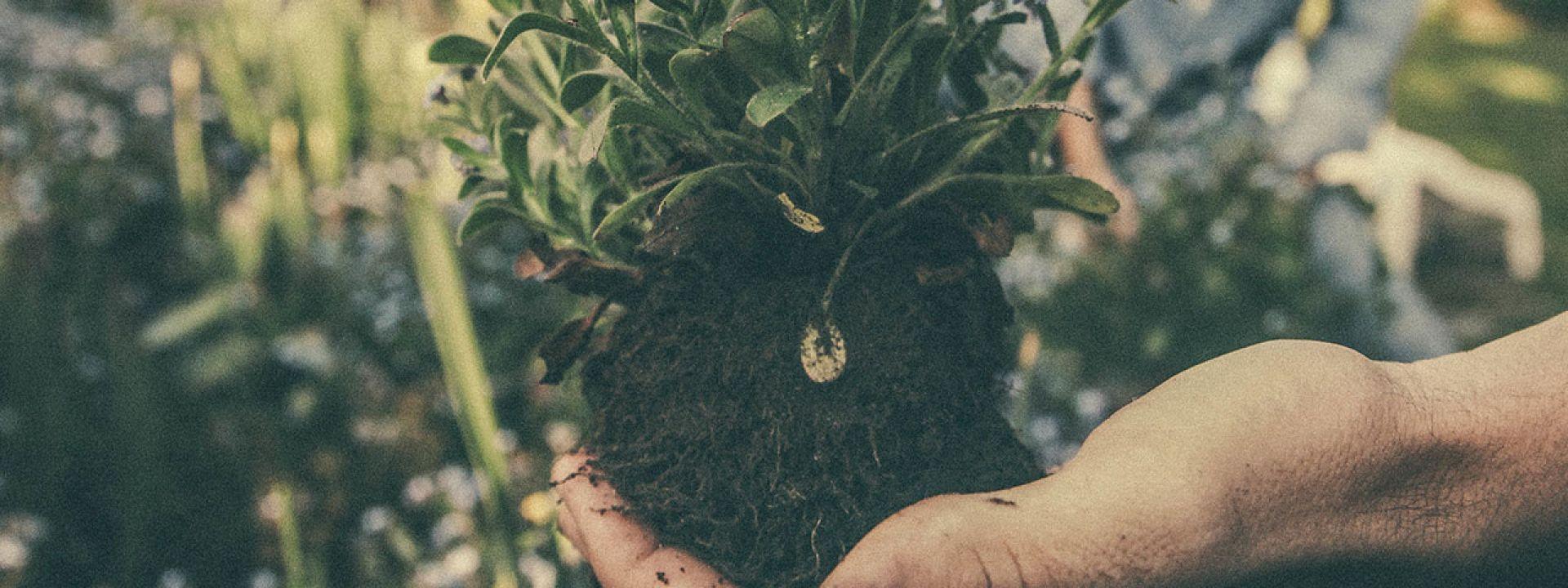 Members Events: Οι Κήποι και τα Μυστικά τους - Ο Αστικός Κήπος - Εικόνα