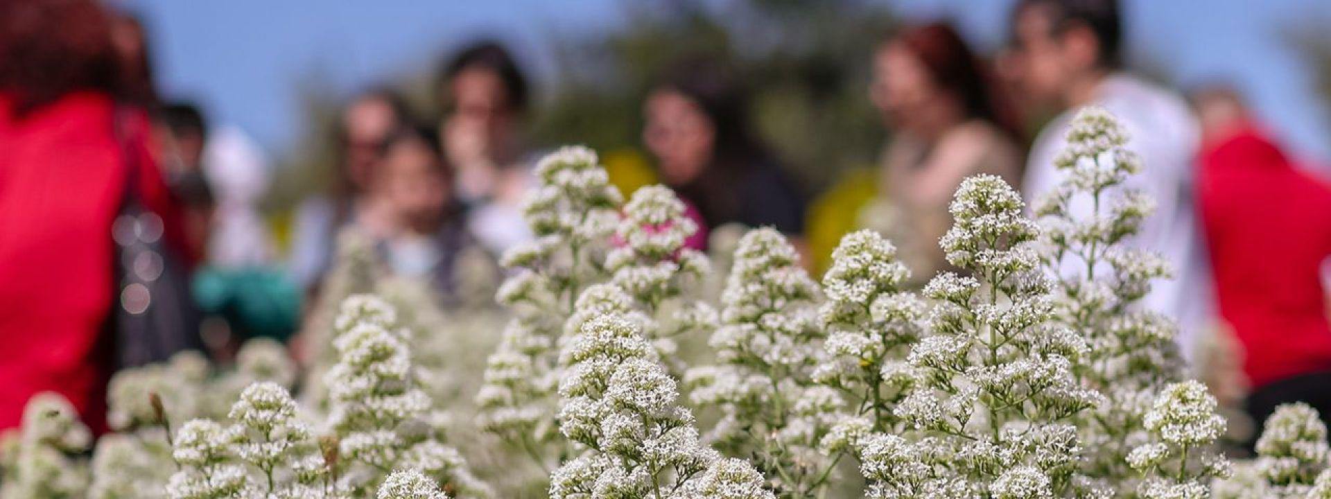 Φωτογραφία με βότανα στο Πάρκο Σταύρος Νιάρχος