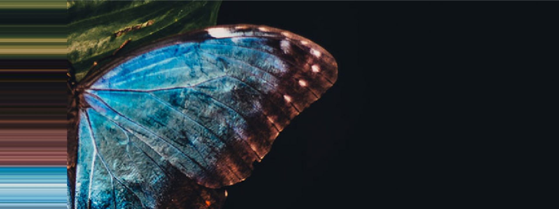 Postponement: Madama Butterfly, Giacomo Puccini - Εικόνα