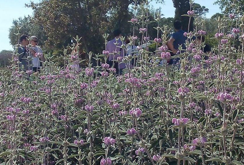 Φωτογραφία από αρωματικά λουλούδια και φυτά στο Πάρκο Σταύρος Νιάρχος