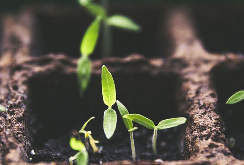 Φωτογραφία που απεικονίζει δρατηριότητες κηπουρικής