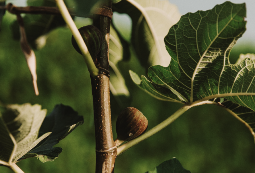 Members' Digital Anthology: Tours at the Stavros Niarchos Park with Botanical Hints - Εικόνα