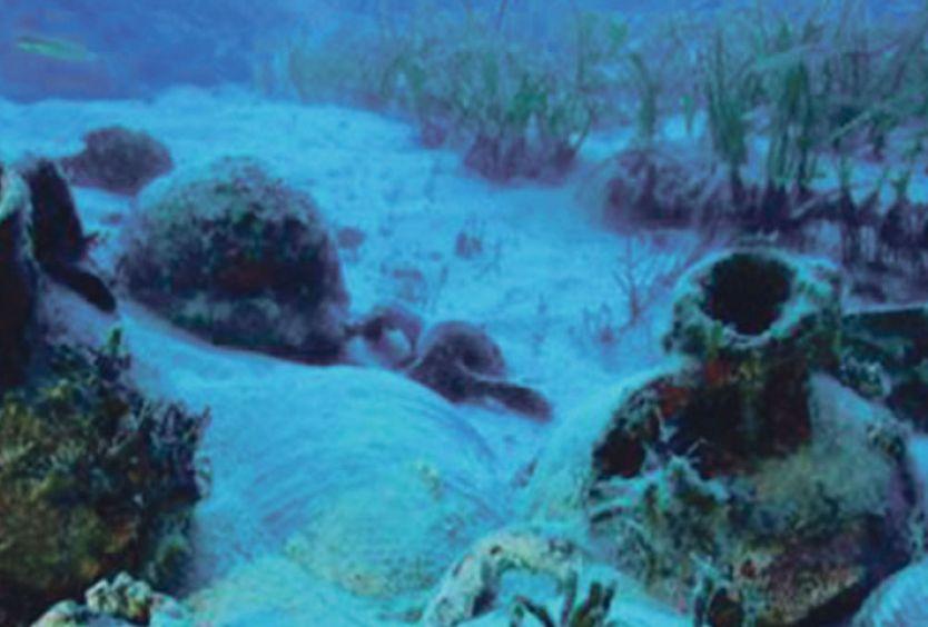 Φωτογραφία που απεικονίζει τον βυθό της θάλασσας