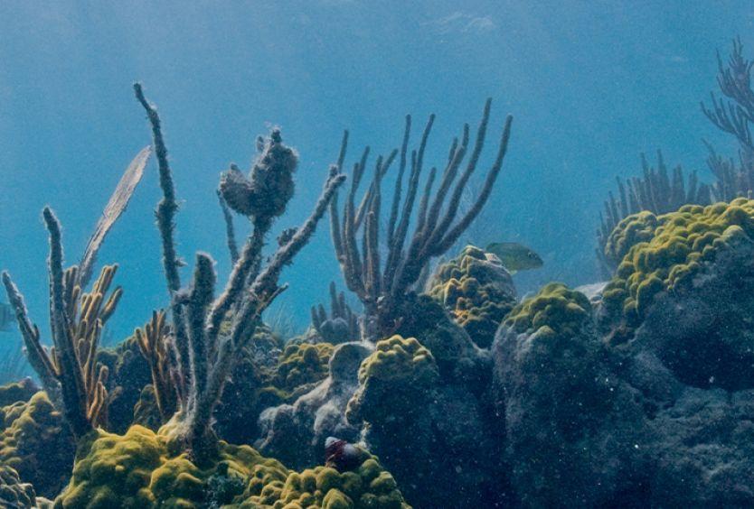 Φωτογραφία από τον βυθό της θάλασσας
