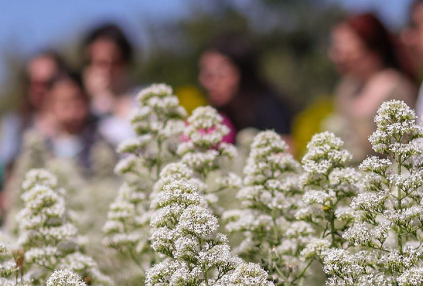 φωτογραφία του Θερινού Μεσογειακού Κήπου