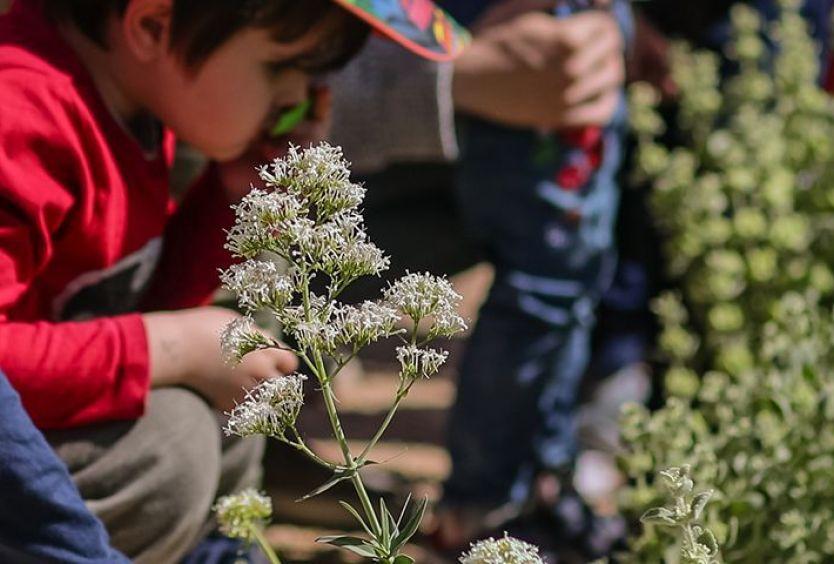 Φωτογραφία που απεικονίζει τα φυτά του Πάρκου Σταύρος Νιάρχος